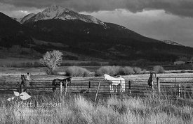 The Golden Hour on a Montana Ranch (Black & White)