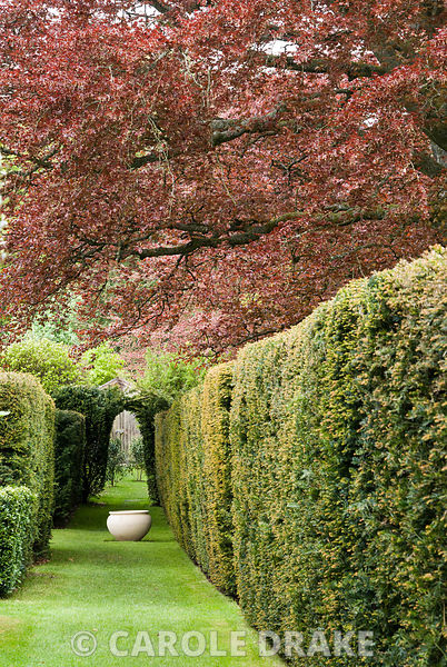 Grassy walk between house and yew hedge with simple pot as focal point and copper beech above. Private garden, Dorset, UK