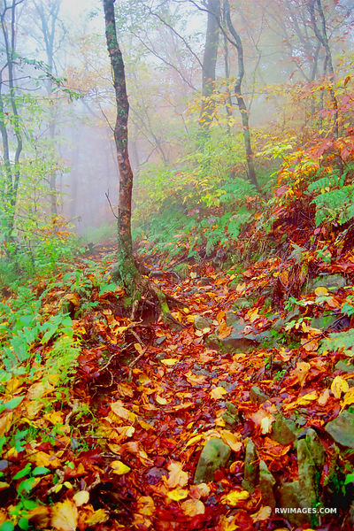APPALACHIAN TRAIL SMOKY MOUNTAINS FALL COLOR VERTICAL