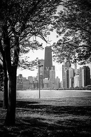 Chicago Hancock Building Through Trees in Black and White