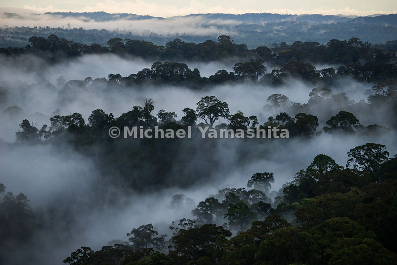 Enroute to Ulu Temburong National Park and Park pics including jungle sunrise from scaffolding canopy walk