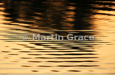 Abstract golden reflections on the River Piquiri at dawn, North Pantanal, Mato Grosso, Brazil
