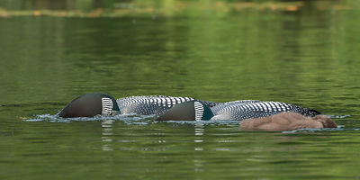Loons-2