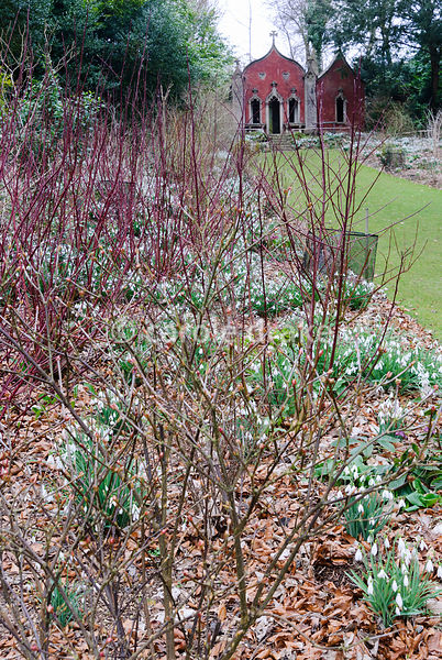 The Red House, seen beyond beds filled with snowdrops below colourful stems of cornus. Painswick Rococo Garden, Painswick, Gl...
