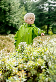 Little Danish boy picking berries in the woods 3