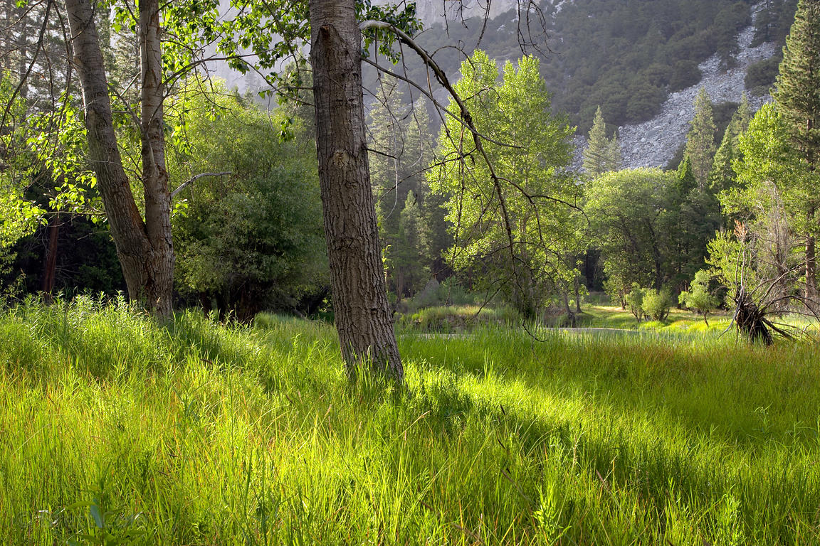 Late sun illuminates the idyllic grassy banks of the Merced River in the Valley, Yosemite National Park, California.