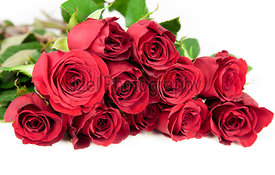 Twelve red roses on a white background.