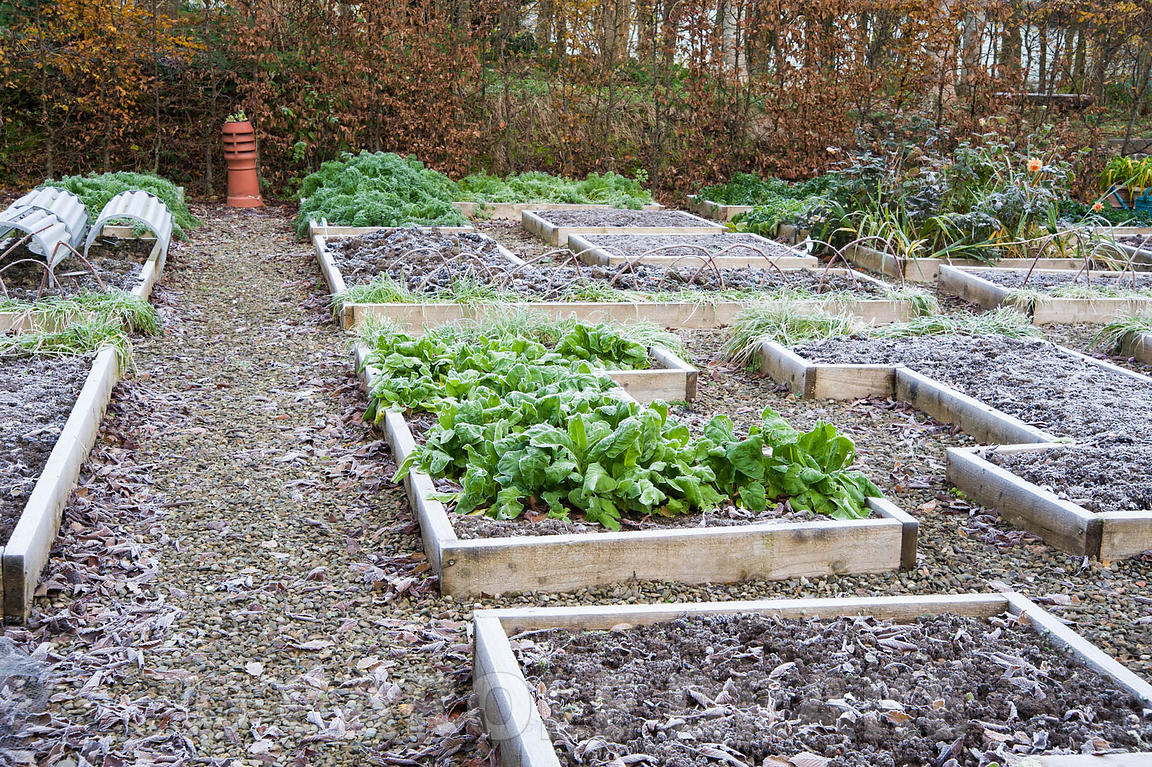 Frosty raised beds in the Kitchen Garden.