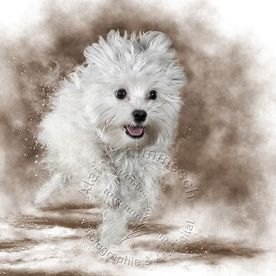 Art-Digital-Alain-Thimmesch-Chien-779