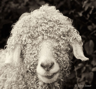 The Goats of Roan - Retired Photographs