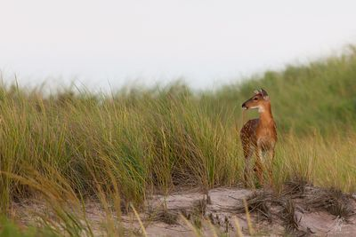 Fire Island National Seashore photos