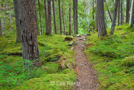 Trail through Forest to Royal Basin in Olympic National Park