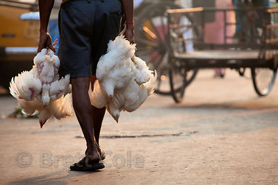 Chickens are taken to be slaughtered at Newmarket, Kolkata, India.