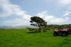 Four Wheeling near Kaikoura
