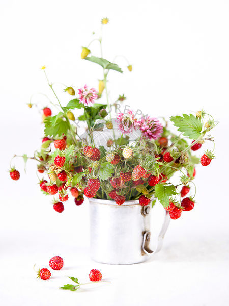 Bouquet of wild strawberries on white background