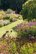 Main borders full of purples and oranges including tall Angelica gigas, eupatorium and heleniums. RHS Garden Harlow Carr, Har...