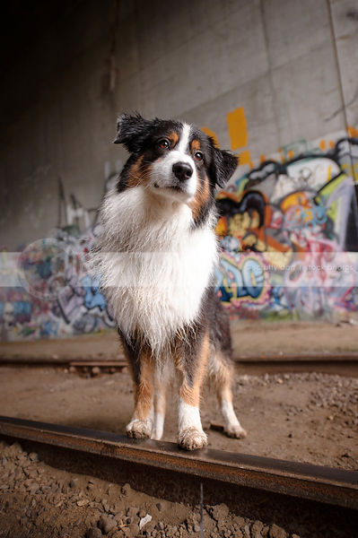 longhaired dog with head tilt in urban graffiti railway tunnel