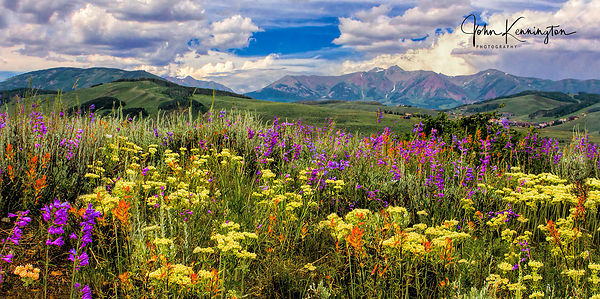 WIldflowers_Above_Crested_Butte_Colorado