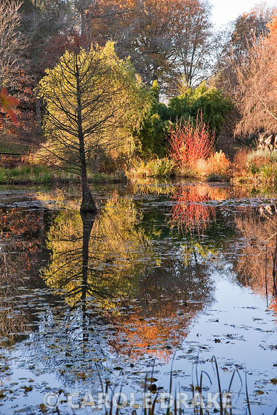 Pond. Sir Harold Hillier Gardens, Ampfield, Romsey, Hants, UK