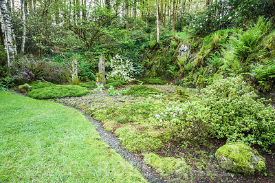 Quarry garden from where stone was quarried to build the house, now inspired by Japanese gardens and a love of wild plants in...