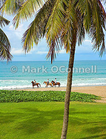 Horses on the beach in Bali