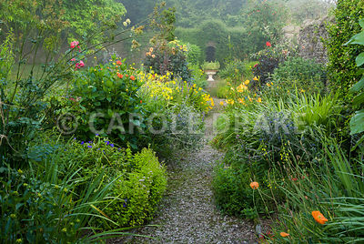 Hot borders line a path with yellow including Helenium 'Butterpat', Madia elegans, red and orange dahlias and daylilies, inte...