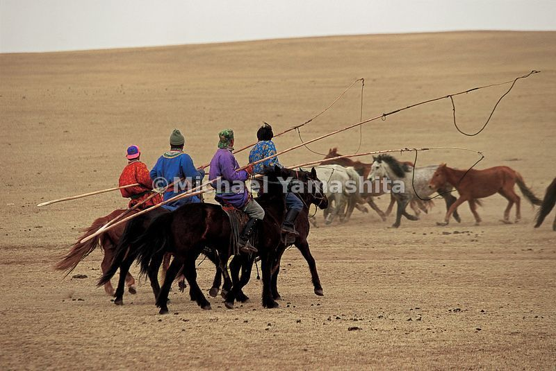 Pony round-up, Mongolian-style. It was the looming threat of the Mongols that changed Ming China's focus from the sea and Zhe...