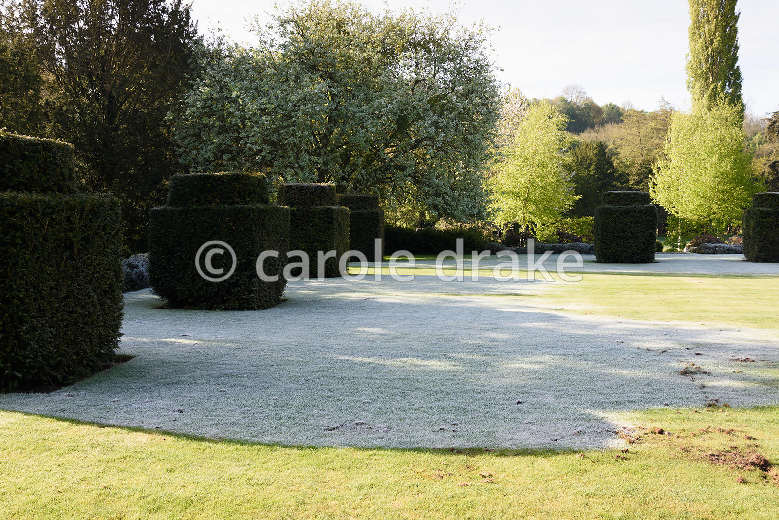 Sun melts frost on a lawn surrounded by yew blocks on a cold April morning at Heale House, Middle Woodford, Wiltshire