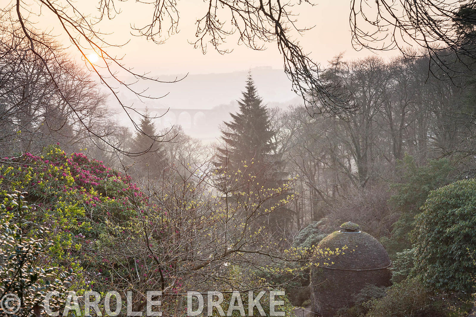 Dawn view over the valley garden with dovecote and Calstock viaduct beyond. Cotehele, Cornwall, UK