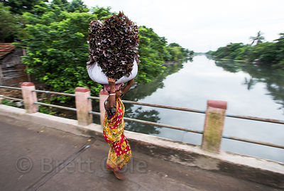 A woman carries lettuce from nearby farm fields to a local market, Chowbaga, Kolkata, India
