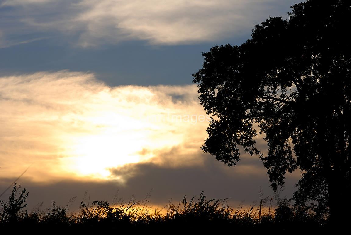 Silhouetted tree at sunrise (right side of image)