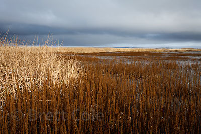Remnant wetlands in the Lower Klamath NWR, California. Once the greatest wetlands in the western US, 80%% of the Klamath Basi...