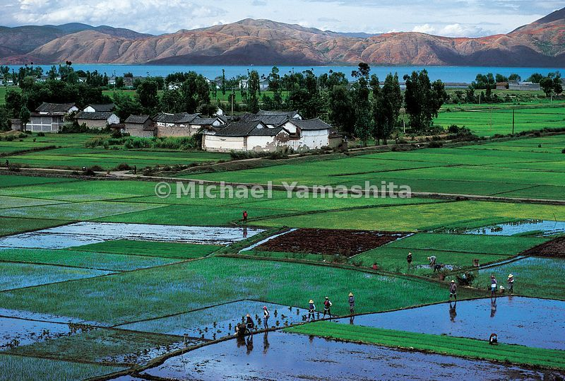 Zheng He was born in a small farming village like this one along the shores of Diandi Lake in Yunnan, a 30 day walk from the ...