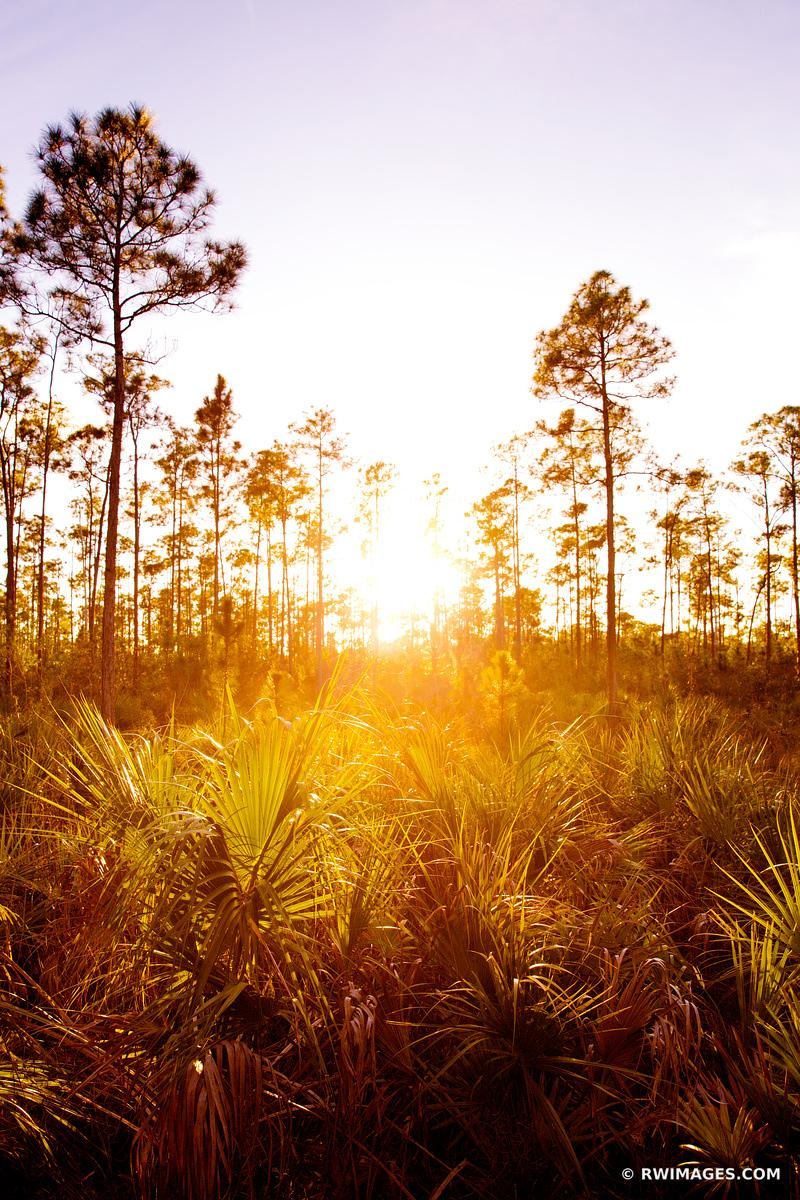 PINELANDS EVERGLADES NATIONAL PARK FLORIDA