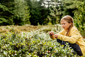 Danish girl picking berries in the woods 2