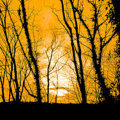 Sunset_yellow_and_black_Thornsett