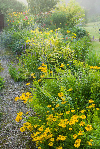 Hot borders include yellow Helenium 'Butterpat' and Madia elegans interspersed with blues of veronicas and eryngiums. The Cid...