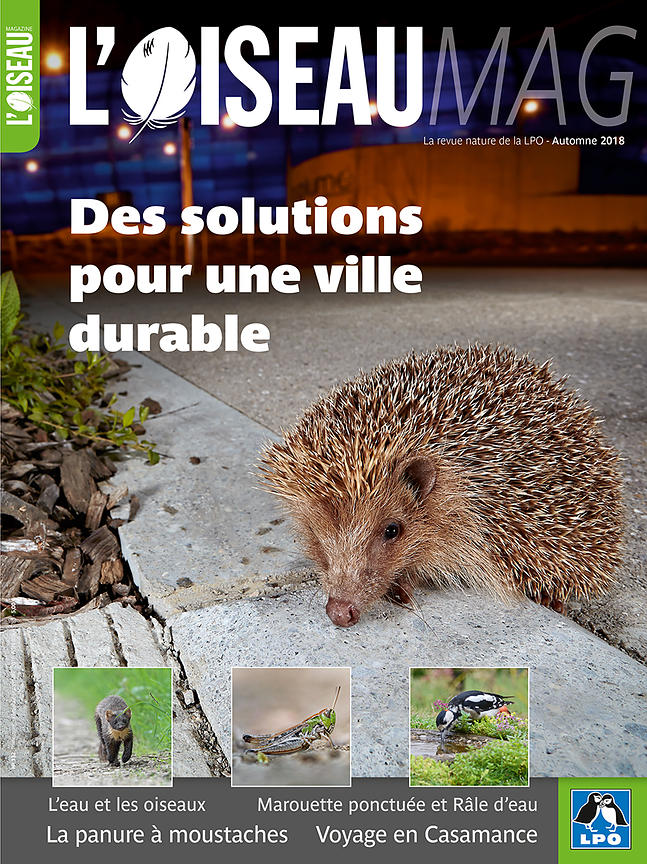 L'Oiseau Magazine (France) - Octobre 2018 photos