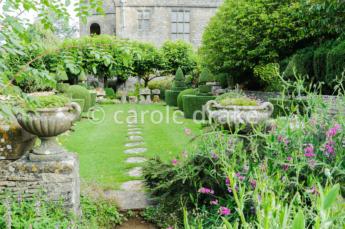 View into topiary garden from path on southern boundary of the garden, framed by perennial pea. Rodmarton Manor, Rodmarton, Tetbury, Glos, UK