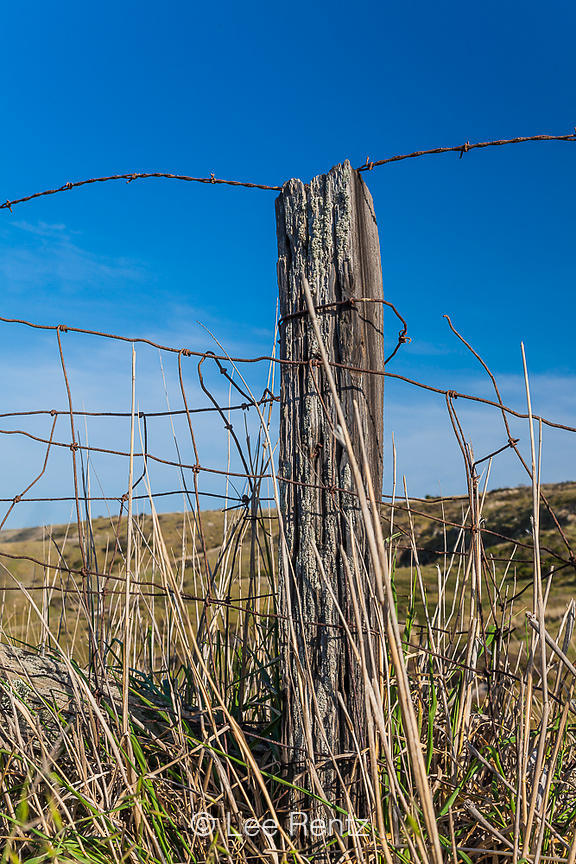 Fencepost from Ranching Days on Santa Cruz Island