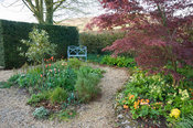 Gravel garden with standard variegated holly, rosemary and orange tulips, and an acer underplanted with lots of primulas, wit...