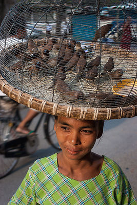 Myanmar---Girl---birds---Ca