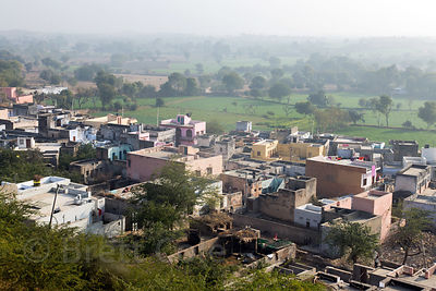 Beautiful Bhagwanpura village, Rajasthan, India, set amongst flower and vegetable farms in the Thar Desert