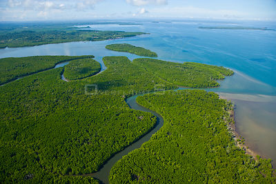 Aerial view of lowland rainforest and mangroves in the estuary of the Kinabatangan River, Sandakan, Sabah, Malaysia  2007