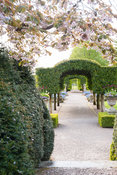 The Summer Garden with central archway of Portugese laurel framed by yew hedges and cherry blossom. Holker Hall, Grange over ...