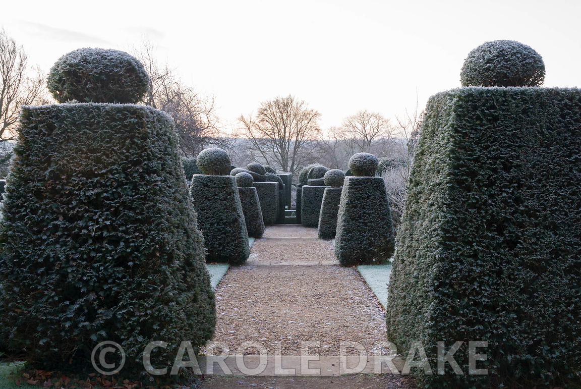 Succession of formal cut yew, with view down into the brick garden. Kingston Maurward Gardens, Dorchester. Dorset, UK