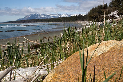 Beach scene, Cape Yakitaga, Lost Coast, Alaska