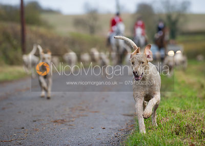 Cottesmore Hunt at Manor Farm 13/11 photos