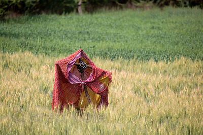 A makeshift scarecrow in a wheat field, Chainpura village, Rajasthan, India