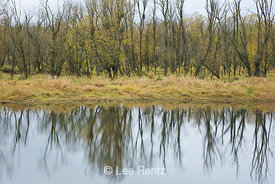 Wetland along the Oaks to Wetlands Trail in Ridgefield National Wildlife Refuge, Ridgefield, Washington, USA, November, 2008_...
